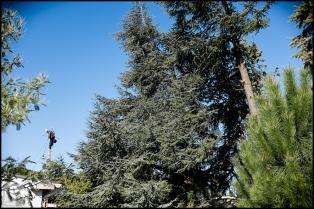 Chats perchés, sur un pylone ou une nacelle